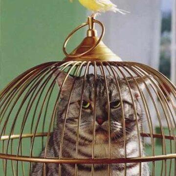 Un uccellino…e DUE POLLI!
